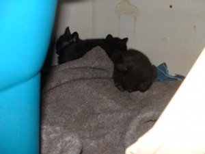 Three of the babies in their new cave.
